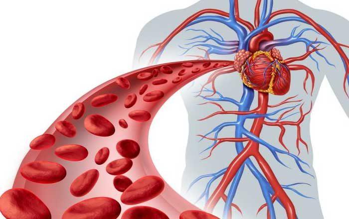 Cum amelioram circulatia sanguina