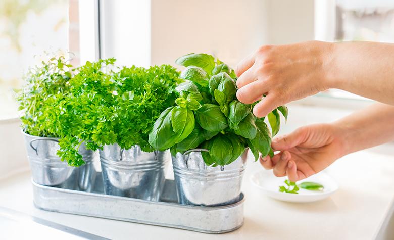 Plante aromatice bune pentru sanatate